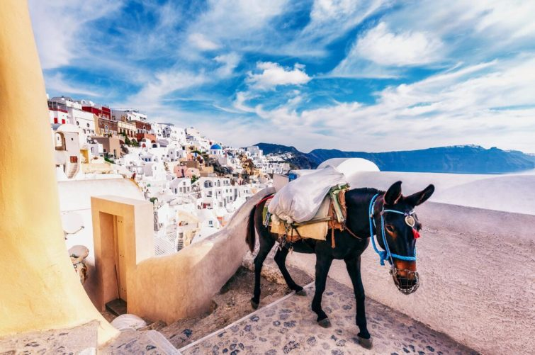 Donkey at Santorini, Greece