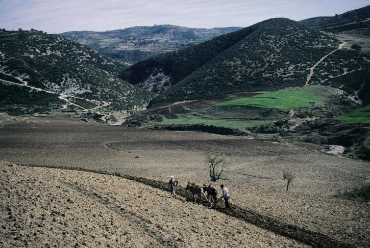 Albania. The degree of mechanization in Albanian agriculture is low. Here it is plowed with oxen. From the Drindalen.
